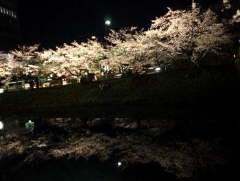 城内の桜5